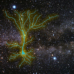 pressrel-startrek-neuron-236.jpg